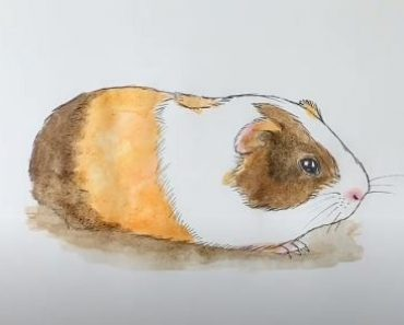 How to draw a guinea pig step by step for beginners