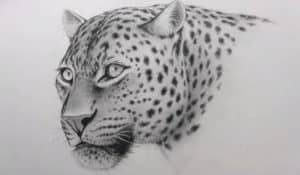 How to draw a leopard face for beginners