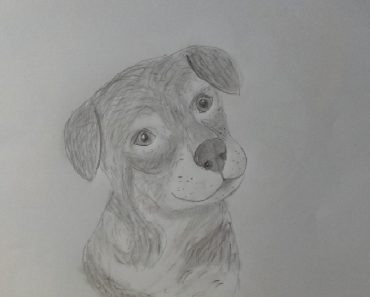 How to draw a dog with pencil