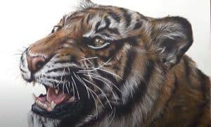 Realistic tiger drawing