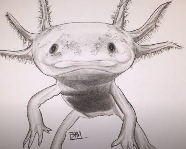 How To Draw An Axolotl Step By Step