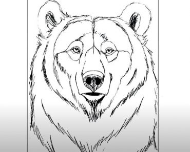 How to Draw a Bear Face Step By Step