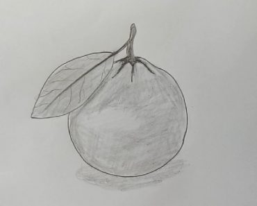 Orange Drawing with Pencil