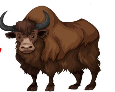 how to draw a yak step by step