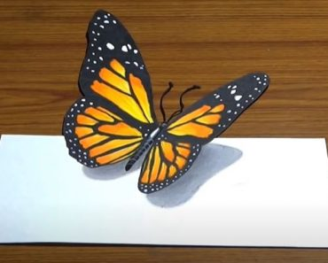 Butterfly Drawing - How to draw a 3D Butterfly Step by Step