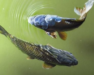 Carp drawing with pencil - How to draw a koi fish for Beginners