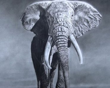Elephant Drawing with Pencil - Wild Animals Drawing