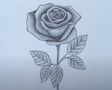 How to Draw A rose by Pencil Step by Step