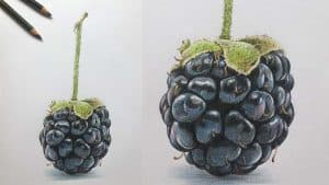How to Draw a Blackberry Step by Step - Fruit Drawings