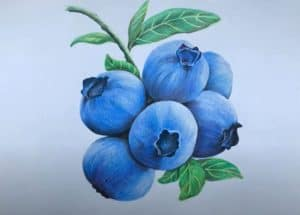 How to Draw a Blueberry Step by Step - Fruit drawing tutorial