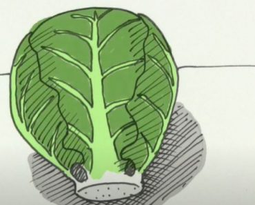 How to Draw a Brussels Sprout Step by Step