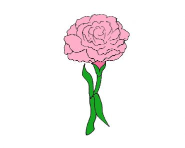 How to Draw a Carnation