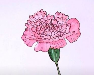 How to Draw a Carnation Step by Step - Flower Drawing Tutorial