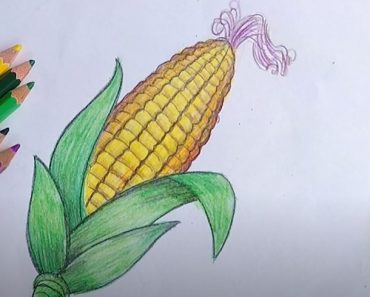How to Draw a Corn Easy for Beginners
