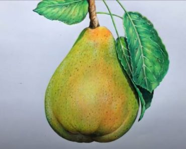 How to Draw a Pear Step by Step - Fruit drawings for Beginners