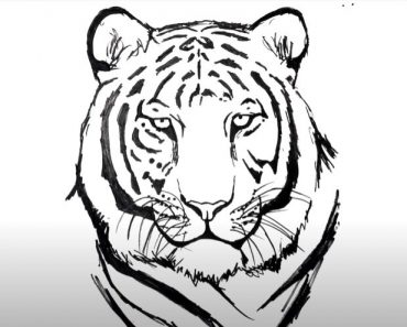 How to Draw a Tiger Face Step by Step