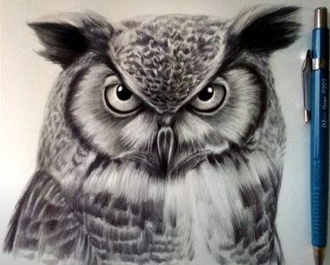 How to Draw an Owl Face Step by Step - Bird Drawing