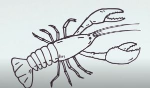 How to draw a Crayfish Step by Step