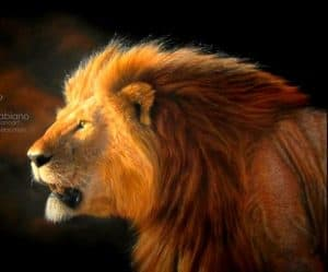 How to draw a Realistic Lion Step by Step