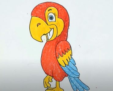 How to draw a cartoon Parrot Step by Step