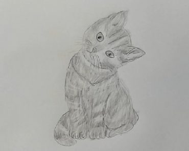 Kitten Drawing with Pencil