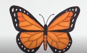 Monarch Butterfly Drawing Step by Step - How to draw a Butterfly