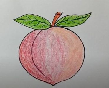 Peach Drawing Easy for Beginners - Fruit Drawing Tutorials