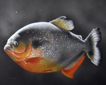 Piranha drawing with Pencil - How to draw a realistic fish