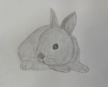 Rabbit Drawing with Pencil