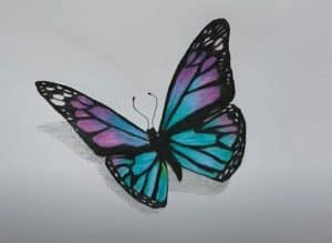 Realistic Butterfly Drawing with Pincel - How to draw a Butterfly