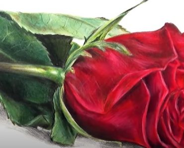 Rose Drawing with Pencil - How to draw a Rose