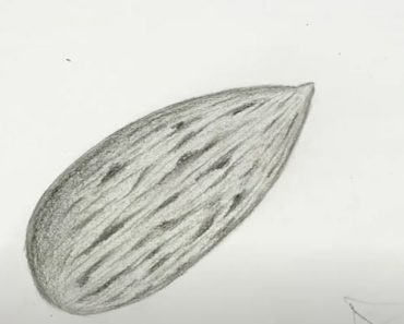 How to Draw Almond Step by Step