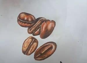 How to Draw Coffee Beans Step by Step