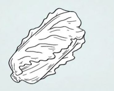 How to Draw a Lettuce Step by Step