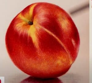 How to Draw a Nectarine Step by Step - Fruits Drawing
