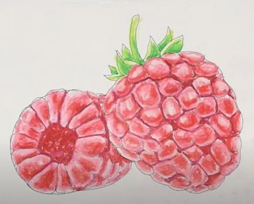 How to Draw a Raspberry Step by Step - Fruits Drawing Tutorial