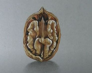 How to Draw a Walnut Step by Step - 3D Drawing art