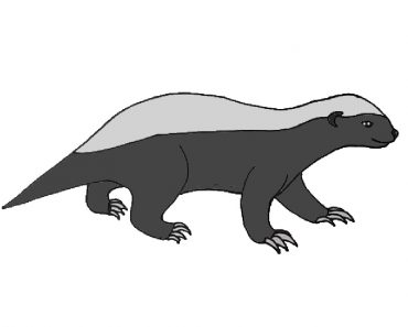 How to draw a badger easy for beginners