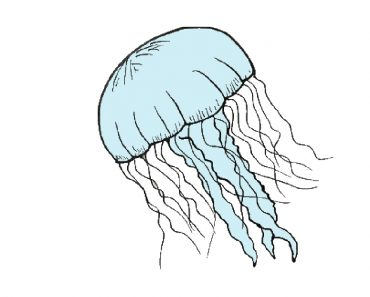 Jellyfish Drawing Easy for Beginners