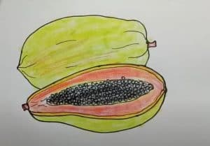 Papaya Drawing Step by Step - How to draw Fruits Easy