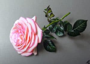 Pink Rose drawing with Pencil - How to draw a realistic rose step by step