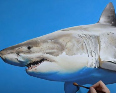 Shark Painting on canvas - 3D Art for Beginners