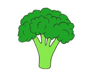 broccoli drawing EASY