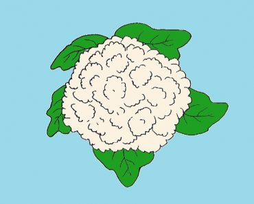 cauliflower drawing easy for beginners