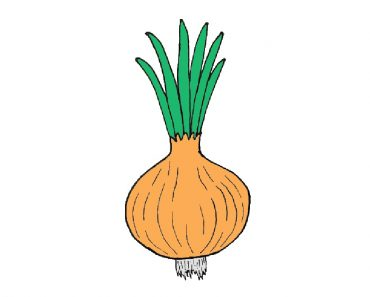 onion drawing easy for beginners