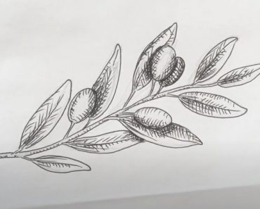 How to Draw Olives Step by Step