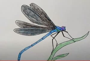 How to Draw a Dragonfly Step by Step