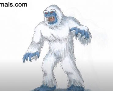 How to Draw a Yeti Step by Step