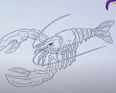 How to draw a lobster step by step