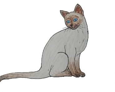 siamese cat drawing easy for beginners